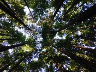 Ympäristö, ihminen ja vastuullisuus - monitieteiset opinnot