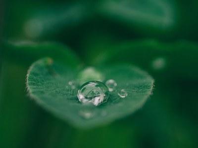 Tutkittua tietoa kestävästä kehityksestä: Luonnonvarojen kestävän käytön perusteet -kurssi